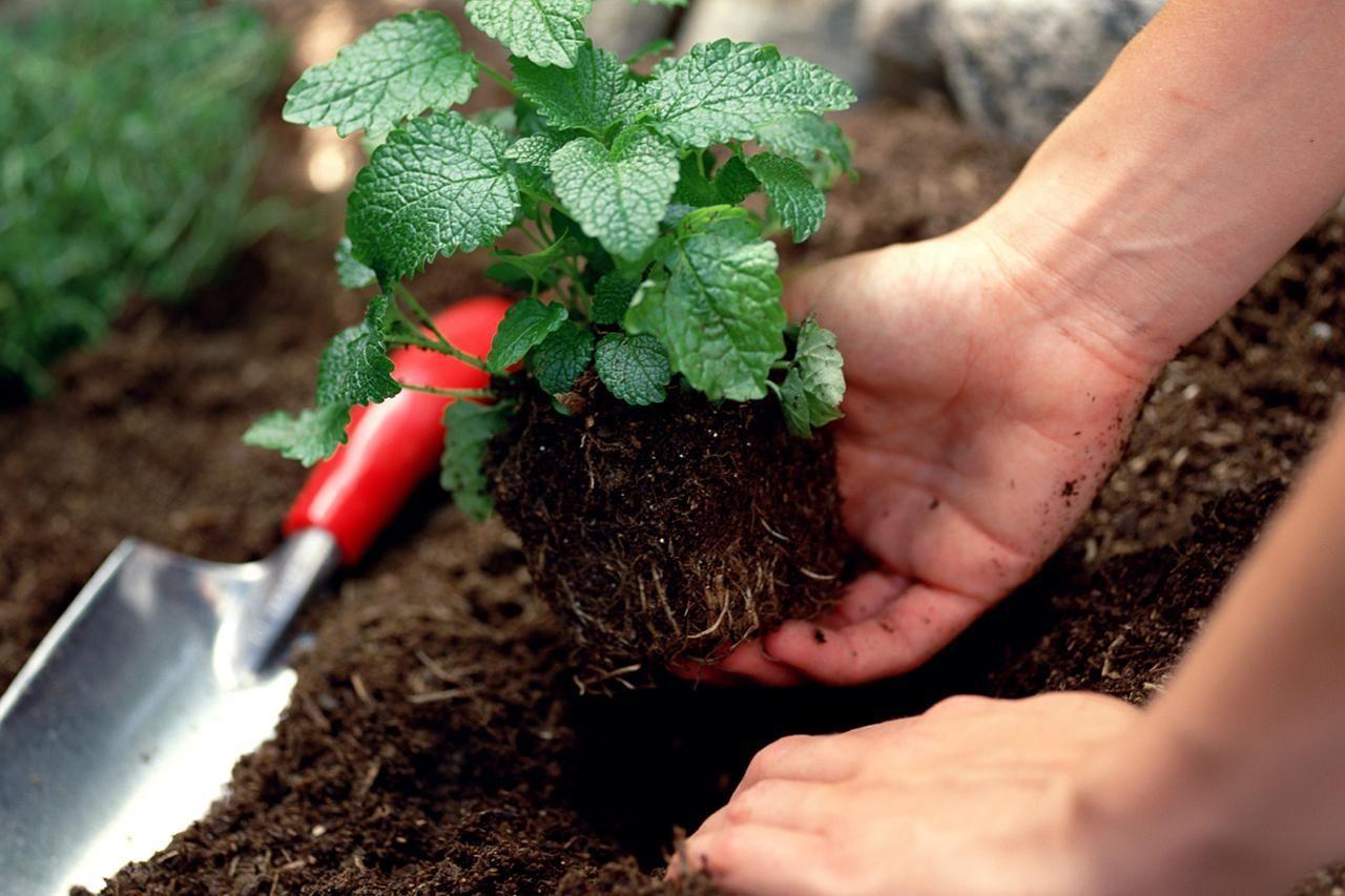 Nấm Cộng Sinh và chuyện không sợ đất khô hạn nhiễm mặn
