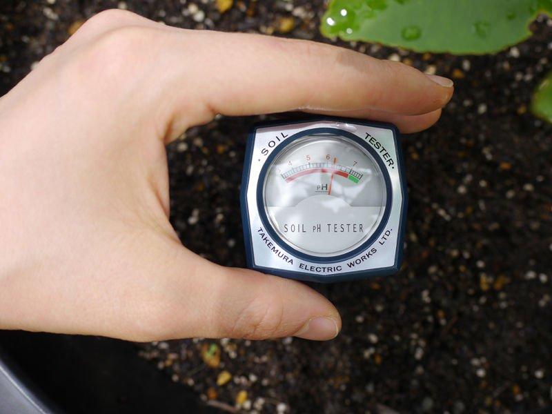 đất trồng
